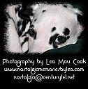 Pet Photography by Nostalgic Memories in Wildlife and Nature