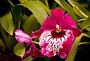 orchid-2l by Mike150 in Member Albums