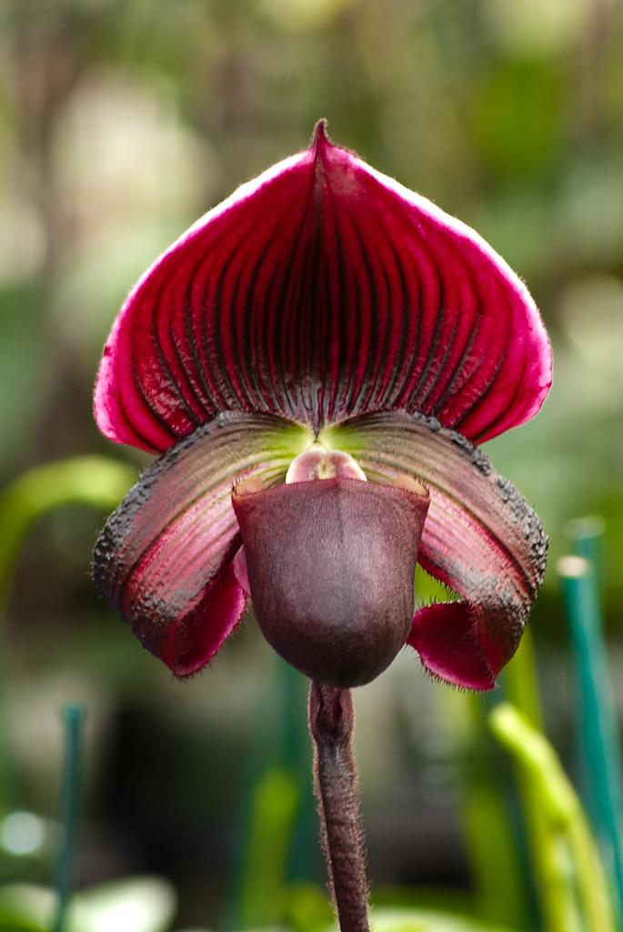 orchid-4l by Mike150 in Member Albums