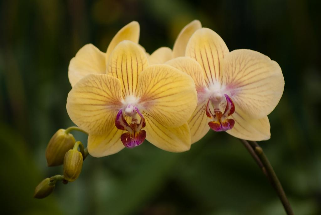orchid-5l by Mike150 in Member Albums