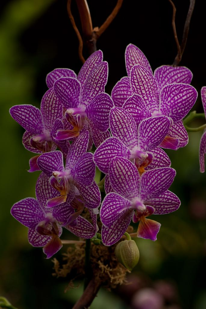 orchid-6l by Mike150 in Member Albums