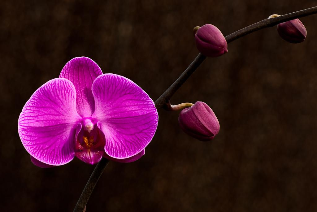 orchid-7l by Mike150 in Member Albums