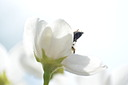 Macro blooms and bees by TammyL.Campbell