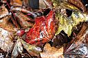 Wet Leaf 4 by Phyllis Petrosky