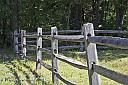 Fence by Phyllis Petrosky