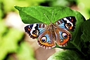 Butterfly 1 by Jim Maguire in Member Albums