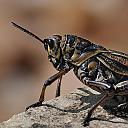 Hoppin Hopper by CMAY in Wildlife and Nature