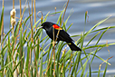 Blackbird 1 by Woodyg3 in Member Albums