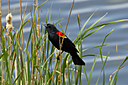 Blackbird 2 by Woodyg3 in Member Albums