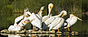 Group of Pelican 1 by Woodyg3 in Member Albums