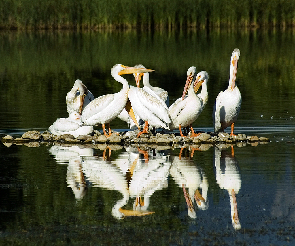 Pelican Group 2 by Woodyg3 in Member Albums