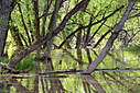 Trees Reflecting by Woodyg3 in Member Albums