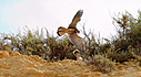 Bird Of Prey At The Beach by lexman59 in Member Albums