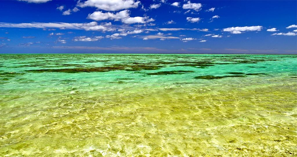 Heron Island Glory by Laurie Anne King in Landscapes
