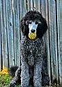 Wally and his ball! by Laurie Anne King in Random Stuff