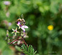 Little Bee by Dawg Pics in Member Albums