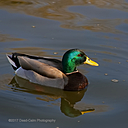 duck n300dsc4908 by Dawg Pics in Member Albums