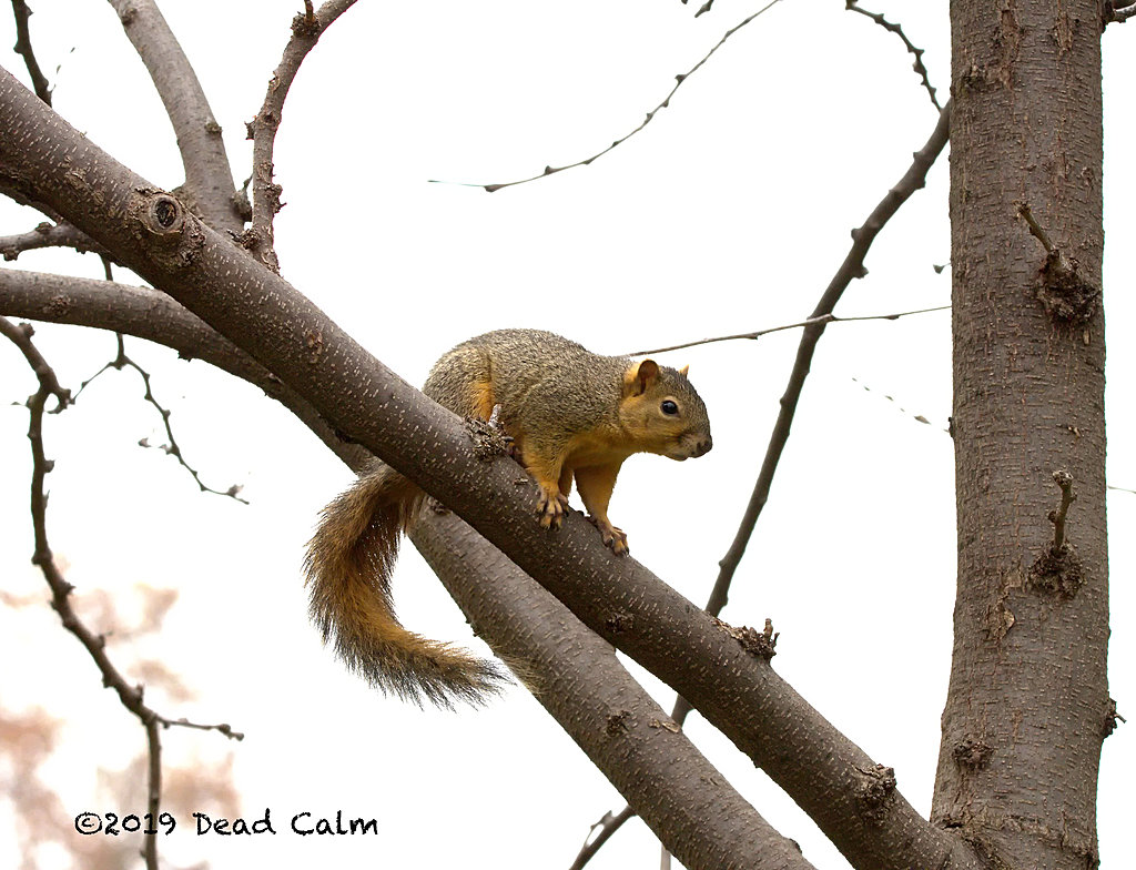 squirrel n 500 0701 by Dawg Pics in Member Albums