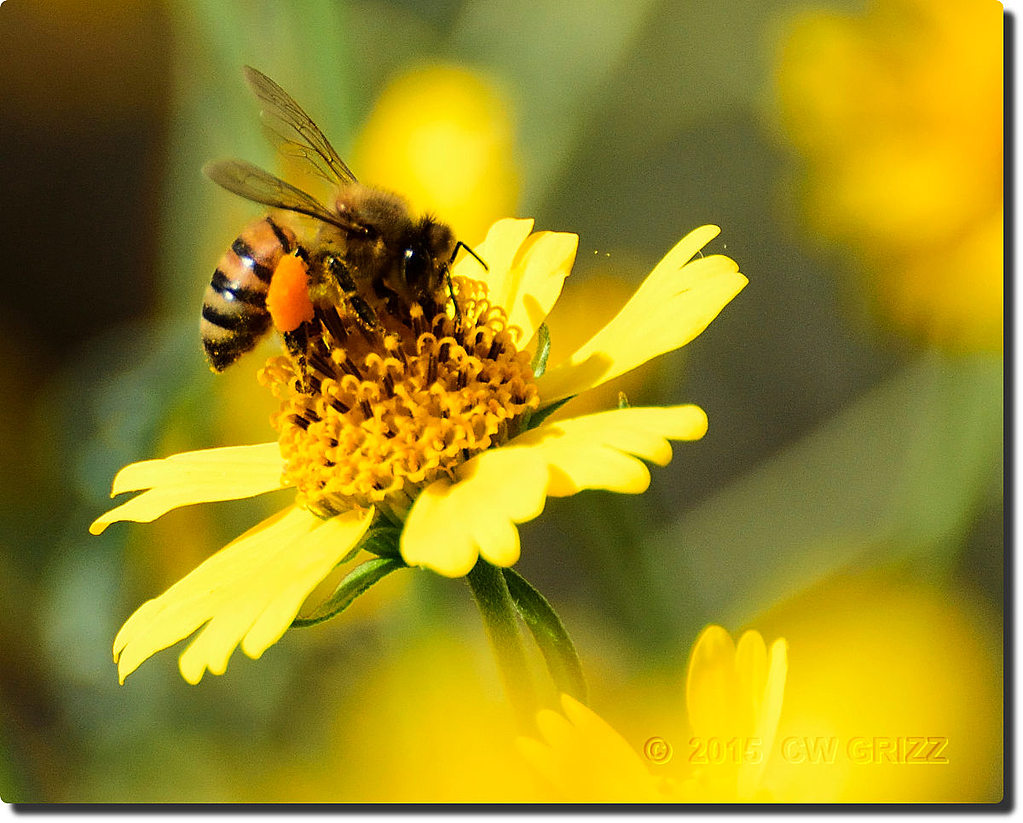 bee-load-9-15-15-cr by cwgrizz in Member Albums