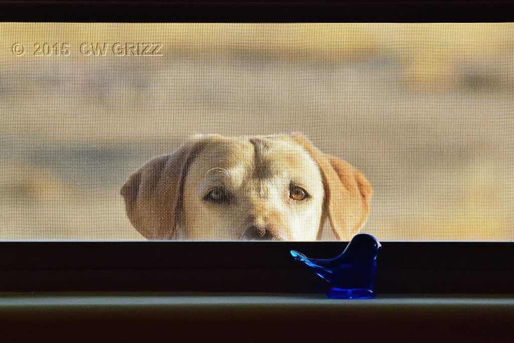 On the outside looking in by cwgrizz in Member Albums