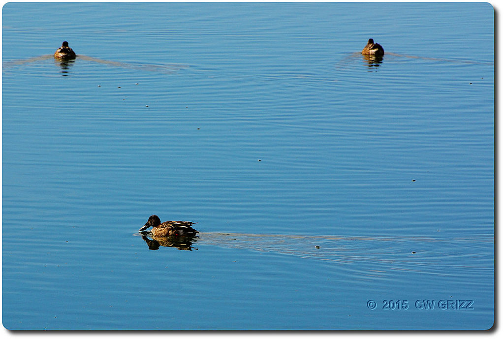duck-willcox-view cr 15-12-07 by cwgrizz in Member Albums