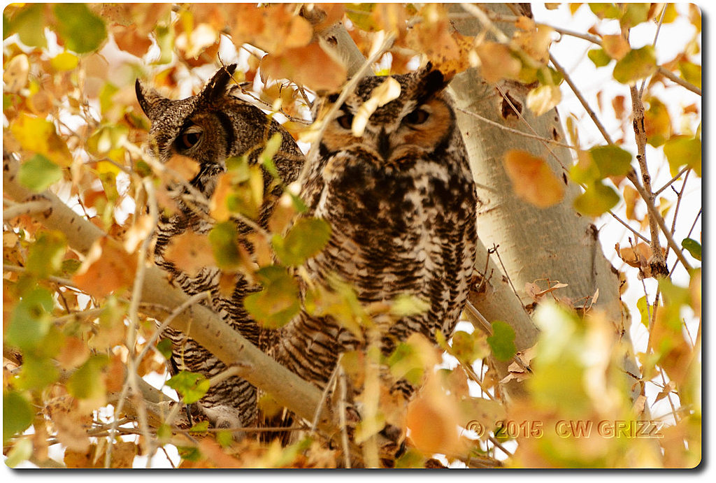 owl-2-cr 15-12-07 d7100 by cwgrizz in Member Albums
