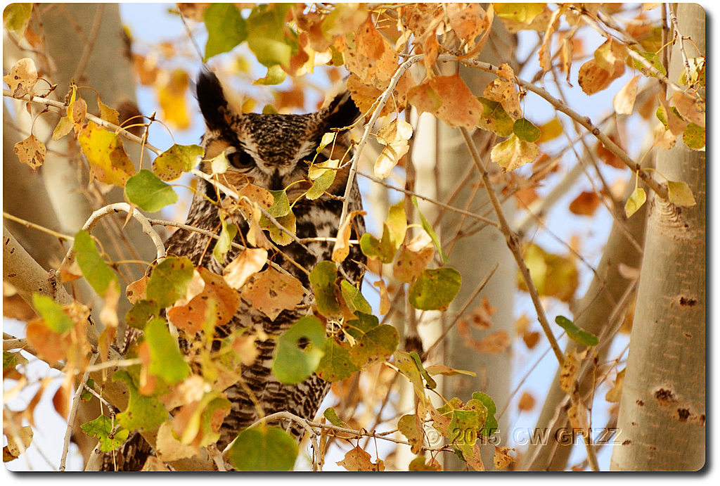 owl-cr 15-12-07 d7100 by cwgrizz in Member Albums