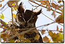 owl d7100 151211 112302-cr dsc0185 by cwgrizz in Member Albums