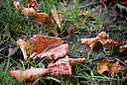 Fallen leaves on the ground by traceyjj in Member Albums