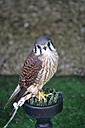 Local Bird of Prey Centre by Ruthh in Member Albums