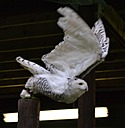 Owl Centre by Ruthh in Member Albums