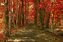 Forest Trail by NoobieNikon in Member Albums