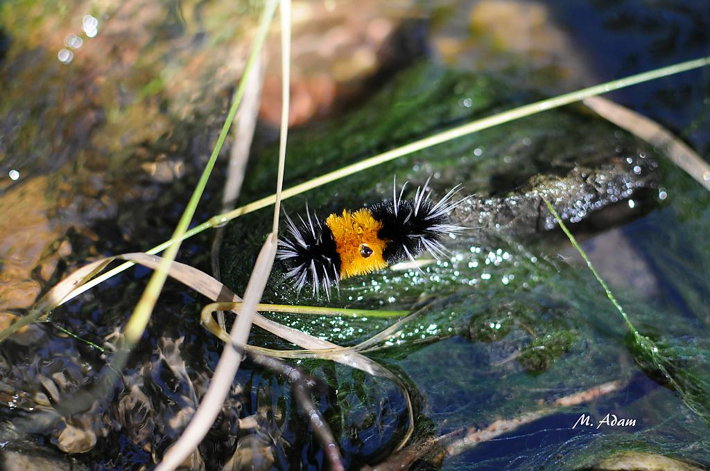 fuzzy lil canyon catapiller by Mis Adam in Member Albums