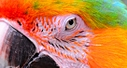 Audobon Zoo Red yellow blue macaw close by PTphoto in PTphoto