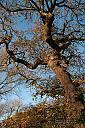 Winter tree by CImagery