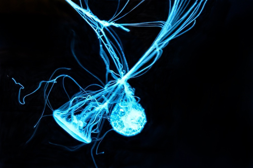 Jellyfish  by get_armbarred in Member Albums