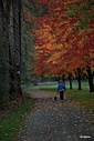 fall colors 681x1024 by Chubby in Member Albums