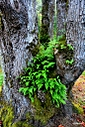 tree fern 683x1024 by Chubby in Member Albums