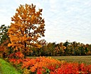 flaming tree by jstimagine in Member Albums