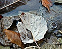 ice drop on leaf by jstimagine in Member Albums