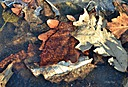 leaves in ice by jstimagine in Member Albums