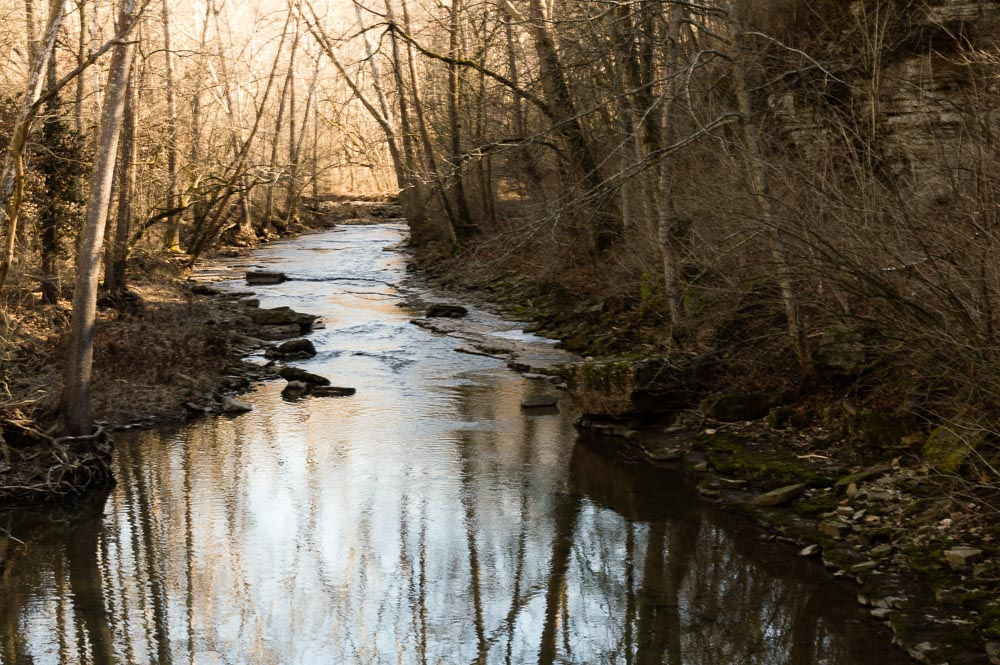Shaded Stream by Danno in Member Albums