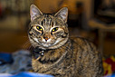 Alaska the cat by Mister Bumbles in Member Albums