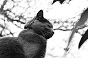 Fluffy The Cat by coolbus18 in Member Albums