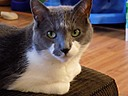 My Cat by realuvsdolphins in Member Albums