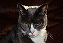 Photogenic Cat by Gerb in Member Albums