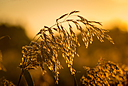 Sunset grass by Griso in Member Albums