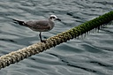 Bird and rope by Pedro Mx in Member Albums