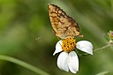 Butterfly by Pedro Mx in Member Albums