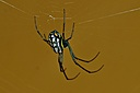 Spider by Pedro Mx in Member Albums